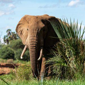 afrique sud elephant